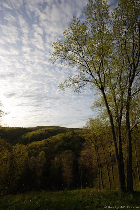 Spring Landscape Picture
