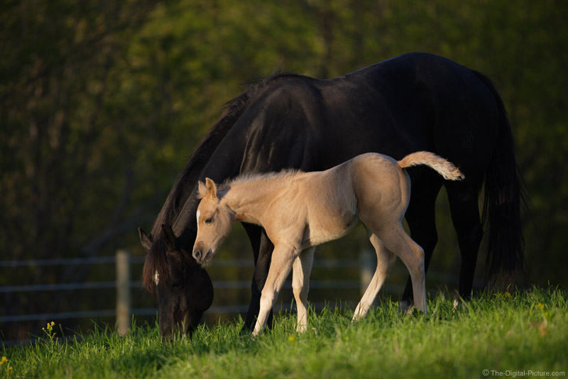 Mother and Son Horses Picture