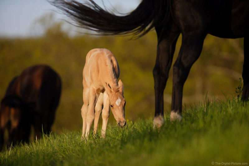 Mare and Colt Picture