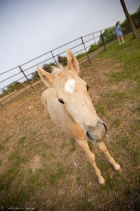 Palomino Colt Picture