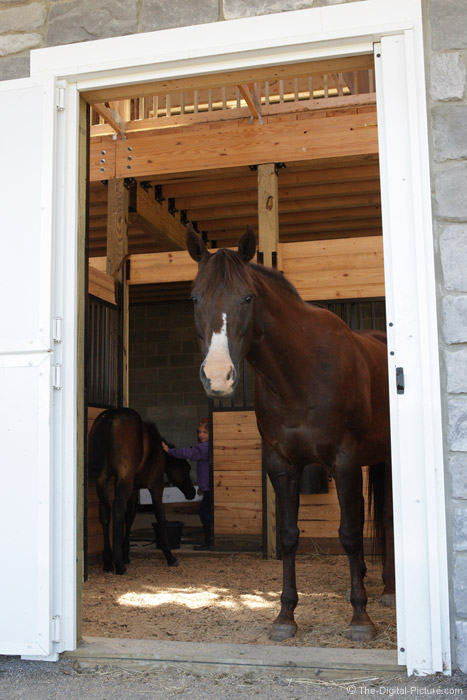 Horses in Stall Picture
