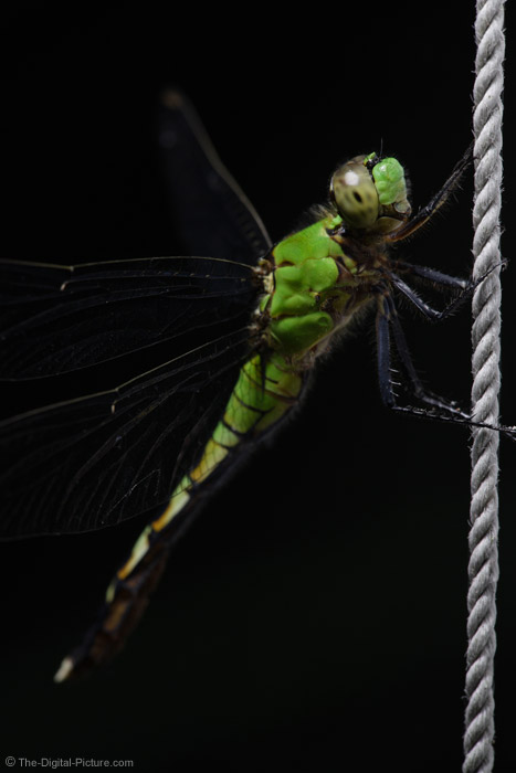 Dragonfly on a Rope Picture
