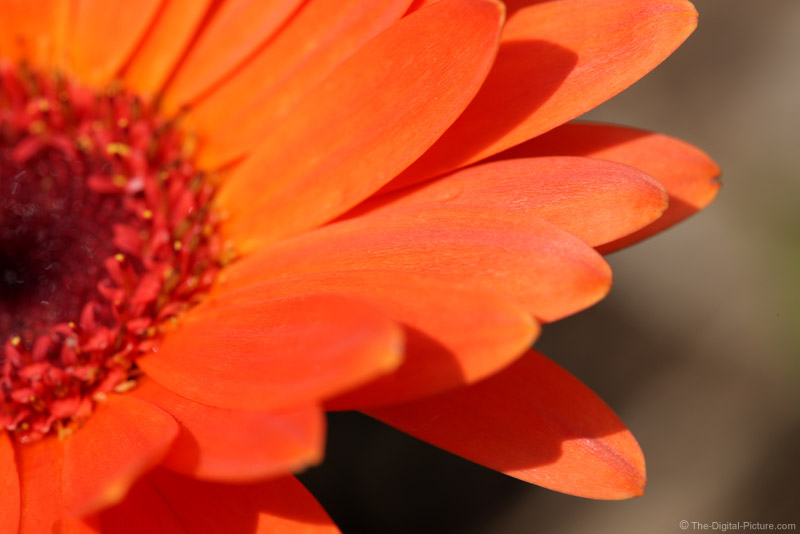 Sunlit Orange Flower Picture