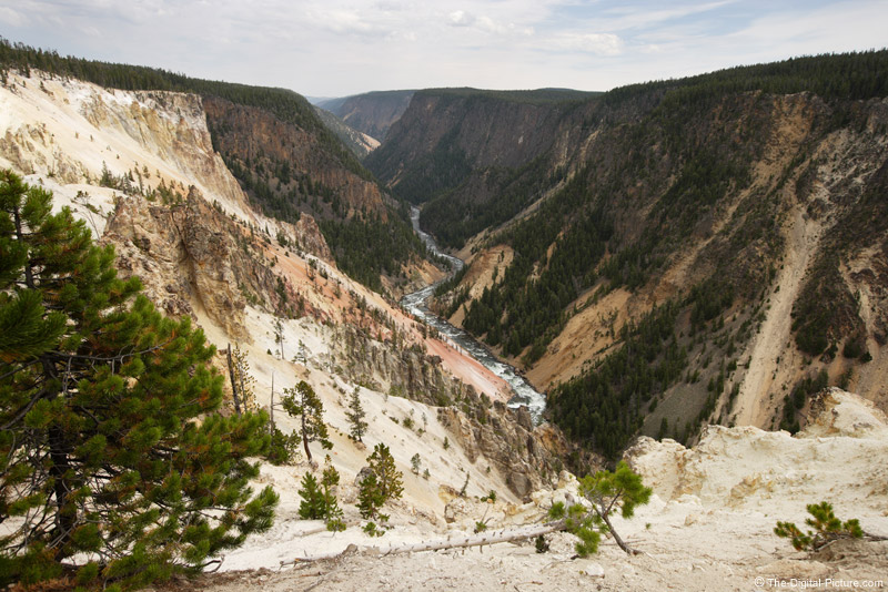 Grand Canyon of Yellowstone Picture