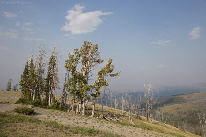 Mount Washburn Area, Yellowstone National Park