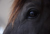 Eye of a Horse Picture