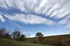 Pasture Picture