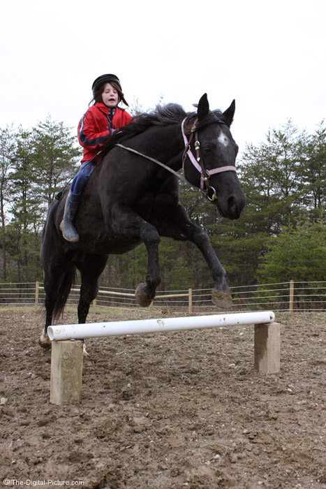 Horse Jumping Picture
