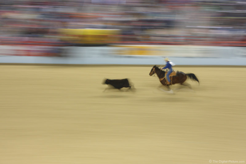 Cowboy Roping  Steer Picture