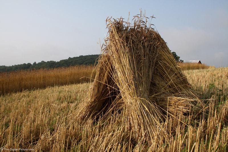 Amish Wheat Shocks