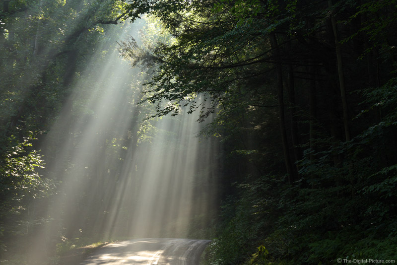 Sunlight Streaming Through Forest Picture
