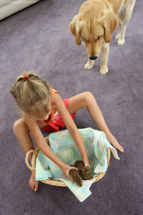 A Girl and Her Baby Rabbits