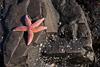 Starfish Picture