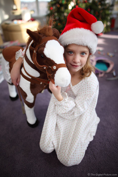 Christmas Horse Picture
