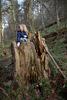 Sitting in a Huge Stump