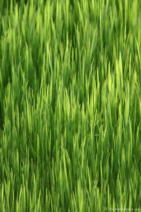 Backlit Grass Picture