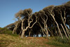 Trees at Fort Fisher, NC