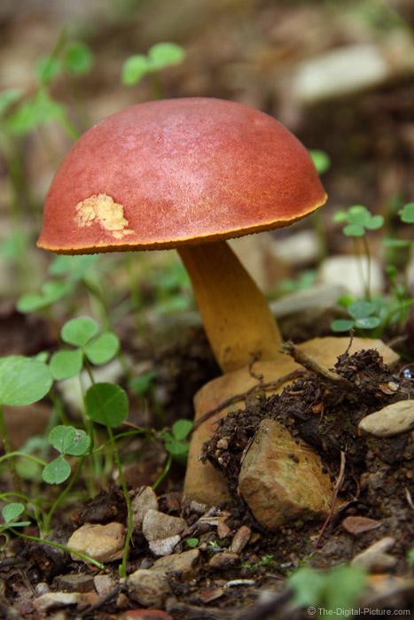 Mushroom and Shamrocks