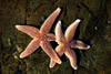 Starfish Holding Hands
