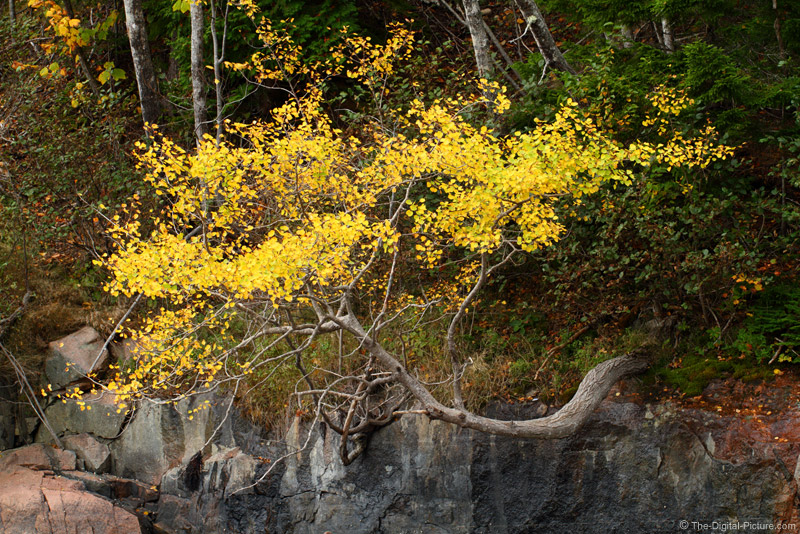 Horizontal Tree in Yellow
