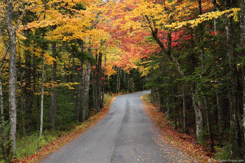 Back Road in Acadia National Park