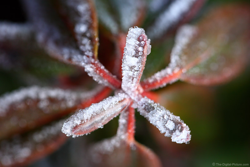Hoar Frost on Ground Cover