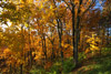 Colorful Fall Woods Scene