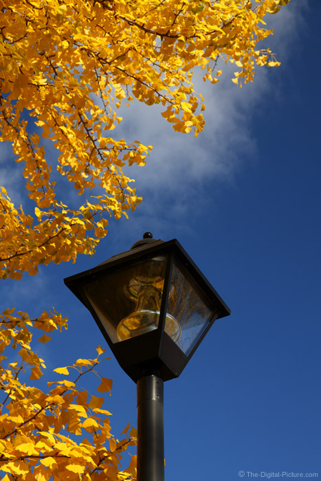 Black Lamp Post Picture