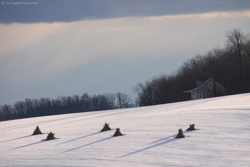 Corn Shocks in the Snow