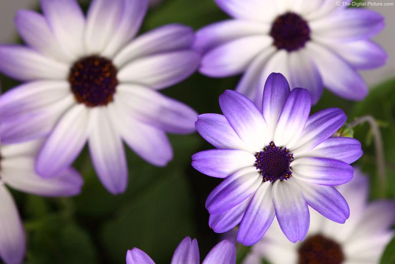 Flower Closeup Picture