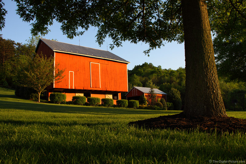 Red Barn and Pin Oak Tree