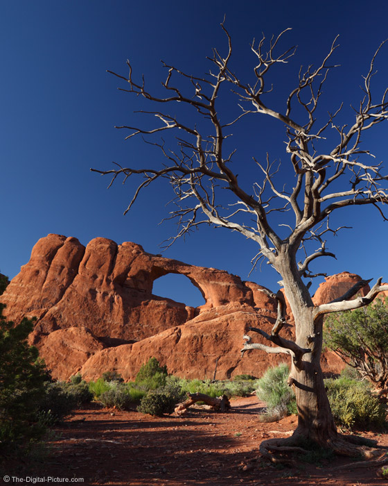 Arch and Dead Tree, Arches National Park