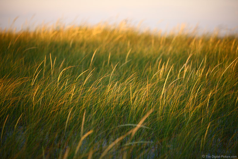 Dune Grasses at Island Beach State Park