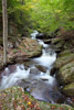 Mountain Stream Picture