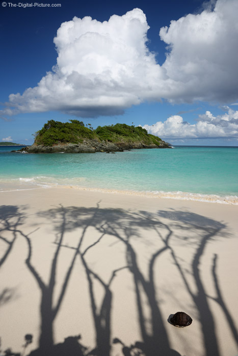 Tree Shadows on Beach
