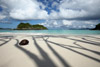 Coconut on the Beach, Trunk Bay, St john