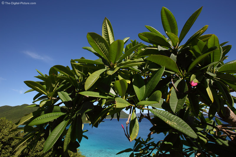 Tropical Foliage, St. John