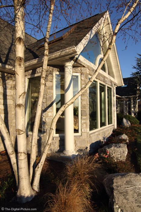 Whitespire Birch and House