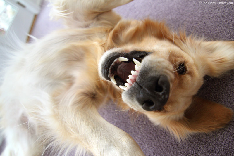 Ferocious Dog Picture