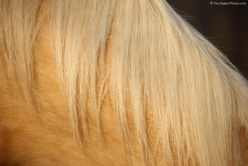 Horse Mane Picture