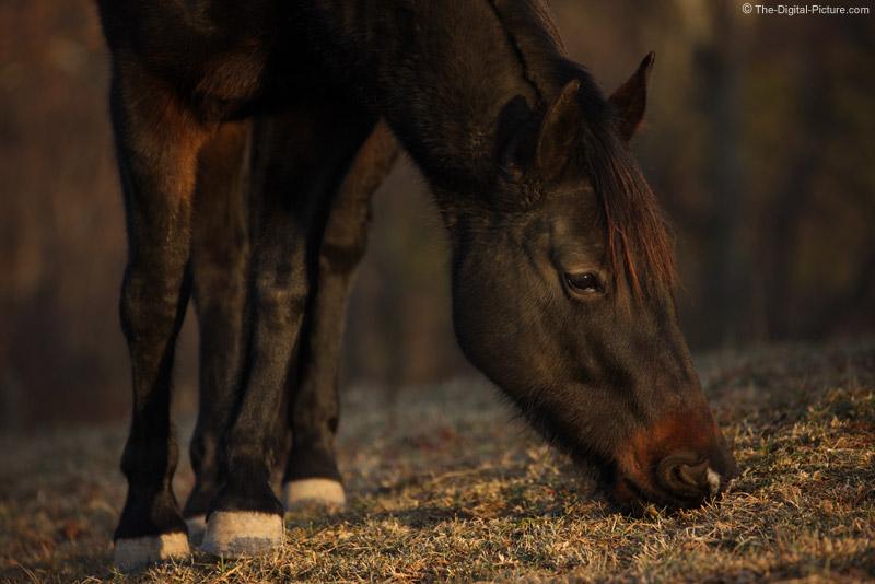 Half of a Quarter Horse