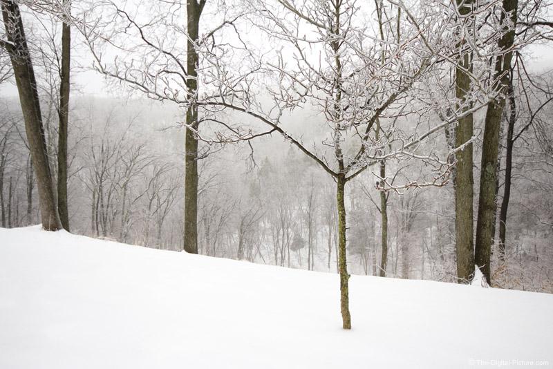 Monochromatic Winter Scene