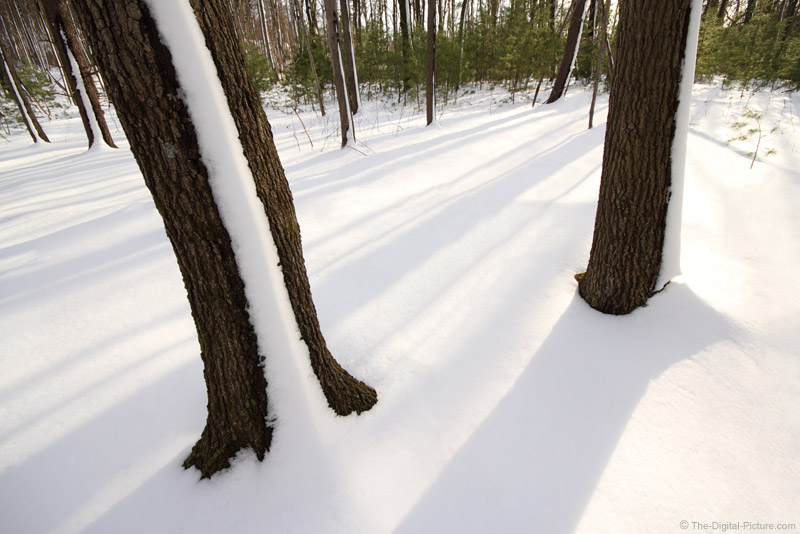Snow-lined Trees