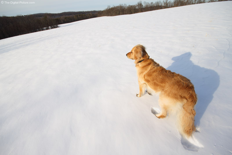 Dog in a Snowy Field