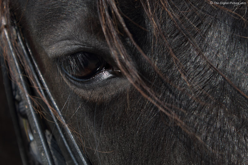 Horse Eye Picture