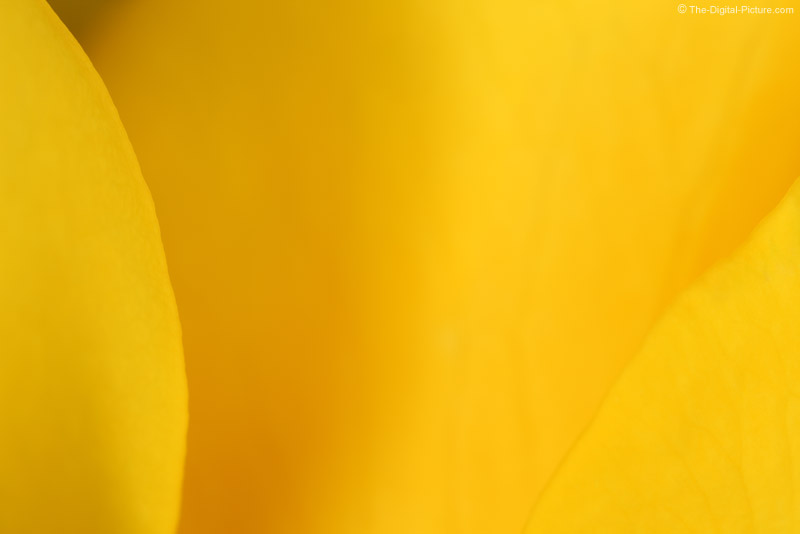Yellow Rose Super Close-up