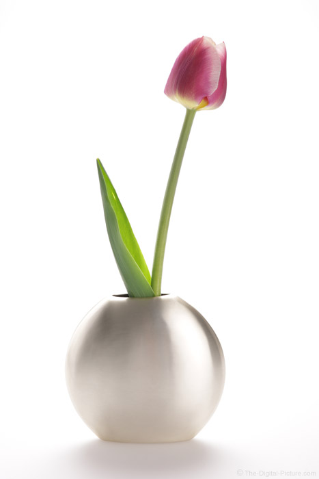 Tulip in a Vase Picture