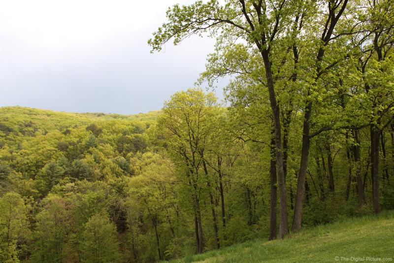 Dark Sky, Bright Woods