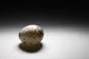 Cowbird Egg Picture