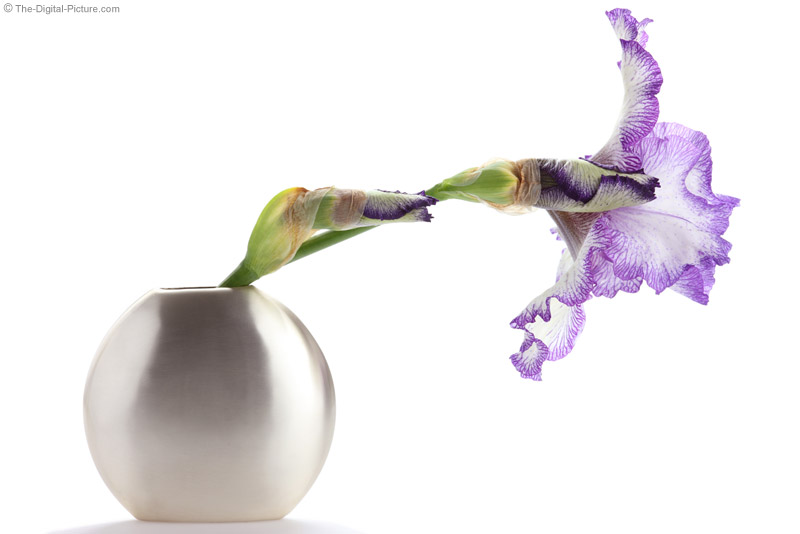 Large Iris in a Vase